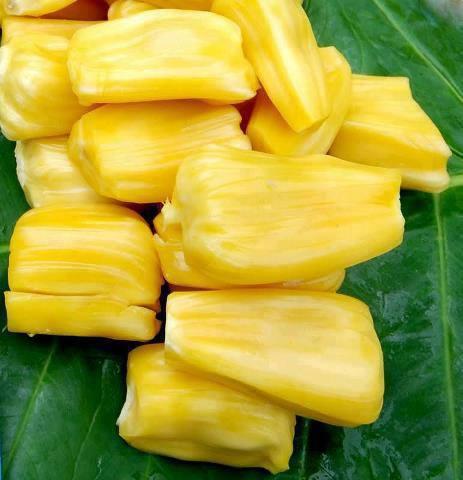 jackfruit goa